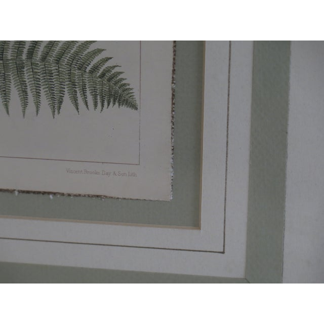 Vincent Brooks Day & Sons Decorative Lithograph Fern Prints - a Pair For Sale - Image 9 of 13