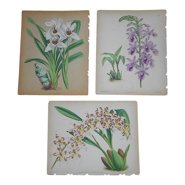 Antique 19th Century Orchid Lithographs-Set of 3 For Sale