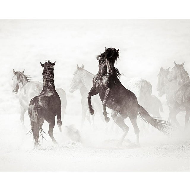 Americana Kimerlee Curyl, Wyoming Renegades II , 2011 For Sale - Image 3 of 4