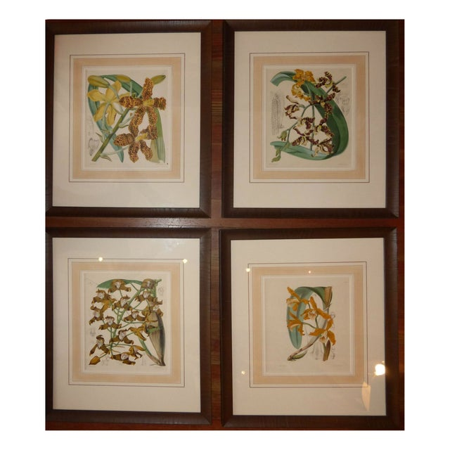 Hand Colored Orchid Engravings - Set of 4 - Image 1 of 5