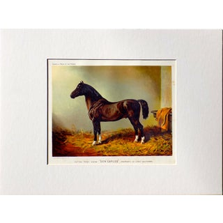 Don Carlos Horse Chromolithograph For Sale