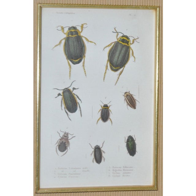 Illustration Pair of 19th Century Hand Colored Insect Plates - Framed For Sale - Image 3 of 8