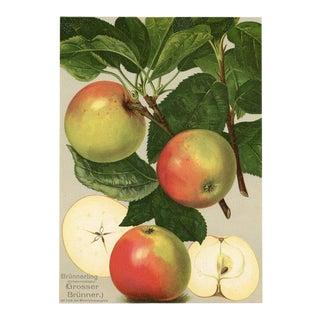 German Apple Print, 1908 Litjhograph For Sale