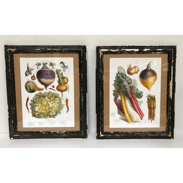 Vintage French Vegetable Prints. The original drawings were commissioned in the last half of the 1800s by the Parisian...