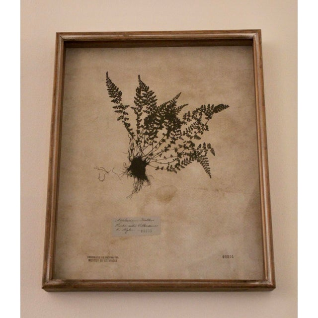 Contemporary Botanical Prints in Reclaimed Wood Frames - a Pair For Sale - Image 3 of 7