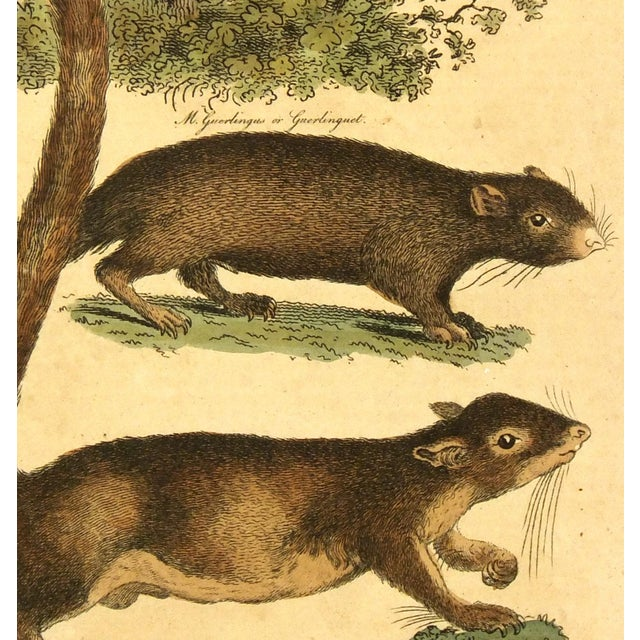 Antique French Engraving, Dormouse & Squirrels, 18 - Image 2 of 3