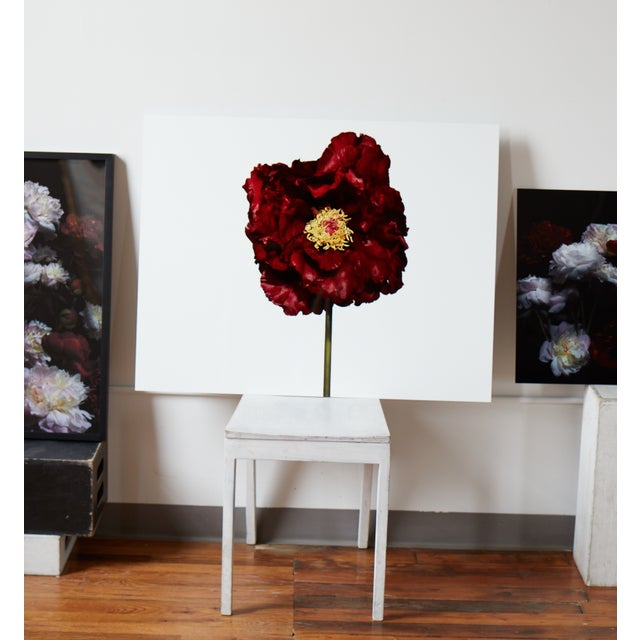 """""""Giant Peony, en Face"""" Photograph - Image 4 of 4"""