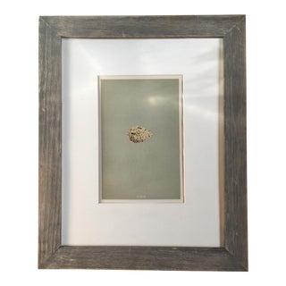 1854 Antique British Bird Eggs Lithograph Print For Sale