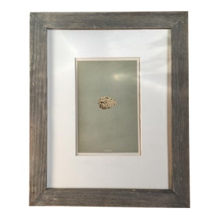British Bird Eggs Lithograph C1854 For Sale