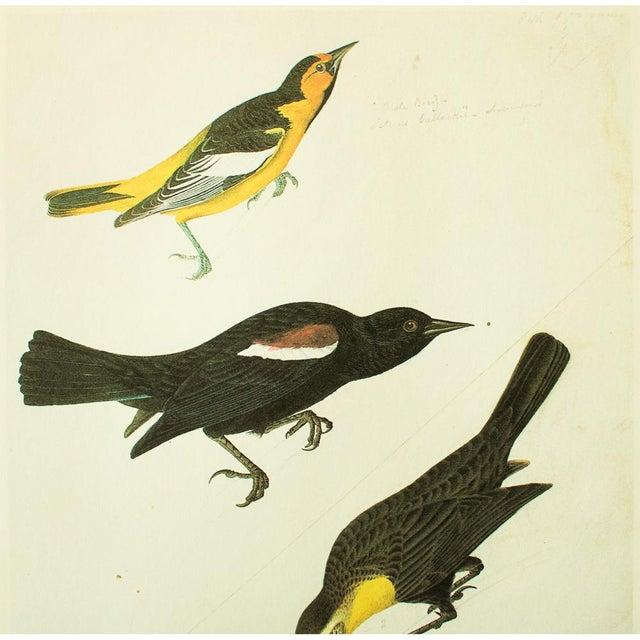 Audubon Reproductions Fine Art Prints Birds of America Meadowlark
