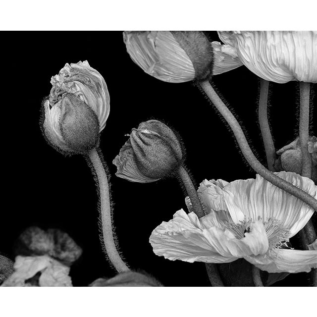 Poppies II is from the series Gymnopédies by photographer Jean Karotkin. Each print is made to order digital print on RC...