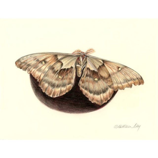 "2010s Original ""Giant Silk Moth 4"" Colored Pencil Drawing For Sale - Image 5 of 5"