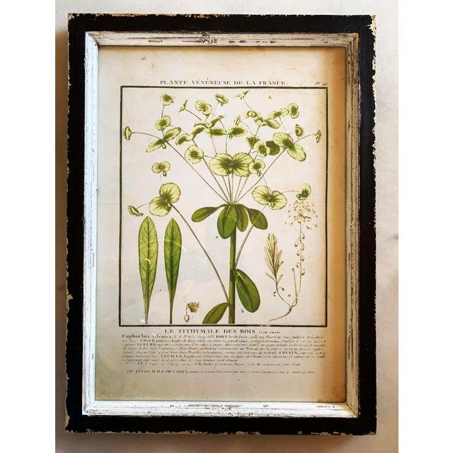 Vintage Framed French Botanical Prints Reproductions - Set of 4 For Sale - Image 4 of 13