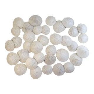 Sand Dollar Sea Shell Collection of 35