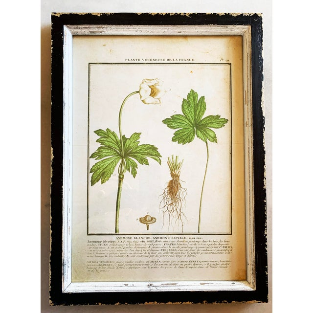 Vintage Framed French Botanical Prints Reproductions - Set of 4 For Sale In Denver - Image 6 of 13
