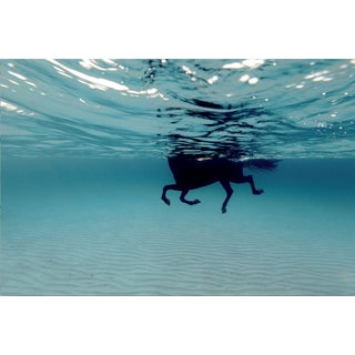 Framed in White Large 'Swimming Horse in the Mediterranean' by Enric Gener For Sale