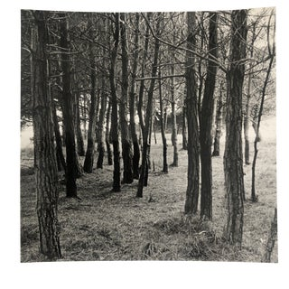 Forest Black and White Photo by Garo For Sale