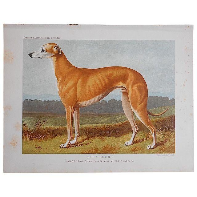 "Antique Dog Lithograph ""Greyhound"" - Image 2 of 2"