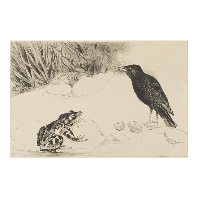 Distressed lithograph on tan paper of bird and frog, signed illegibly, dated 1930 and numbered 24/40 in pencil along lower...