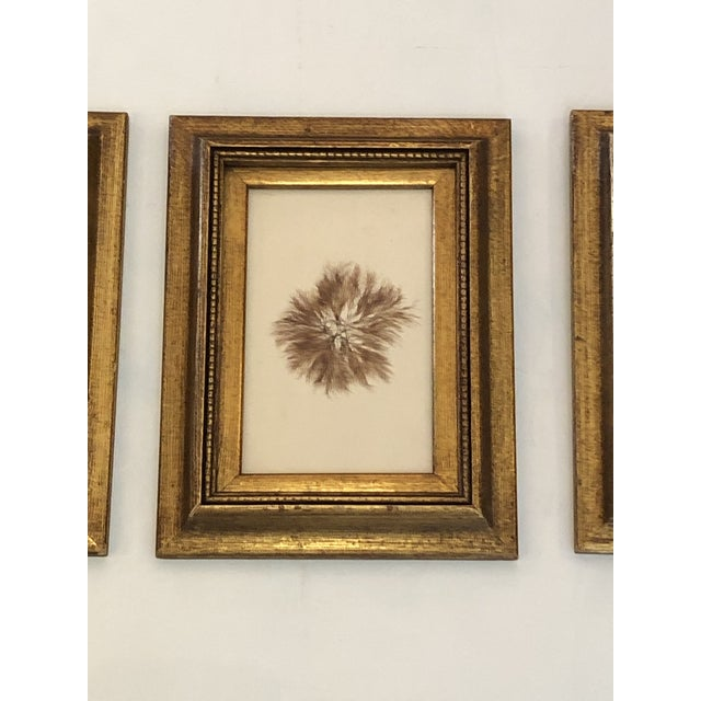 Traditional 19th Century Pressed Organic Botanicals in Giltwood Frames -Set of 3 For Sale - Image 3 of 11