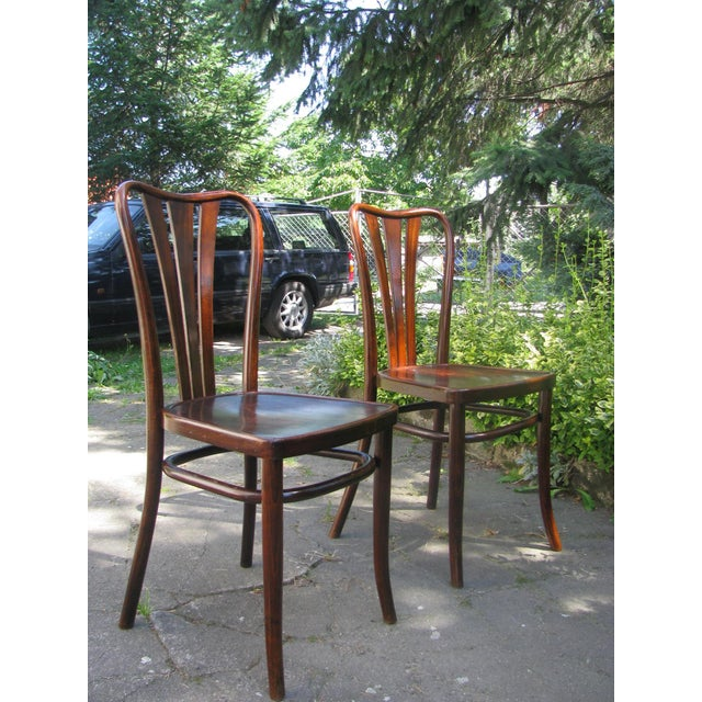 Brown Vintage Dining Chairs by Thonet, 1930s - Set of 6 For Sale - Image 8 of 11