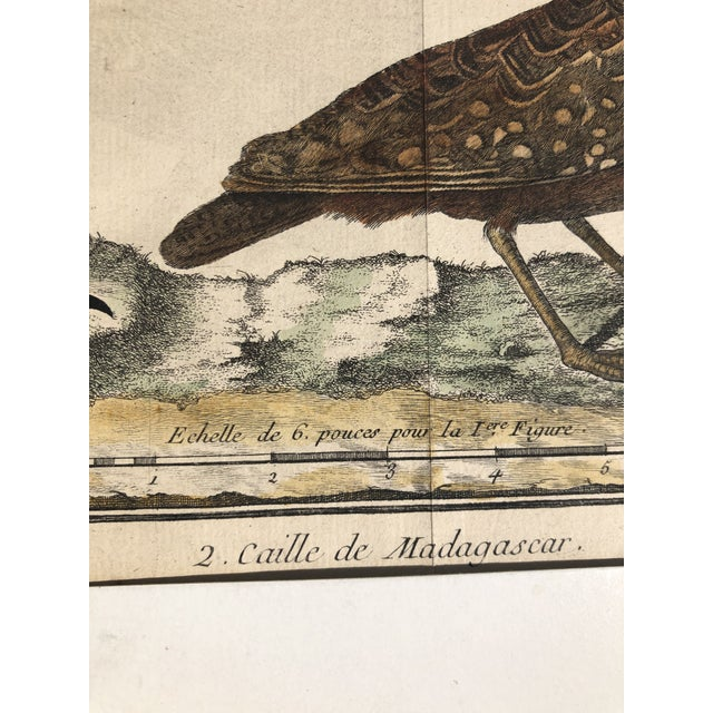 Paper 18th Century French Matted Bird Engraving by Martinet Featuring a Senegal Partridge and a Madagascar Quail For Sale - Image 7 of 13