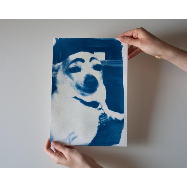 Limited Edition Cyanotype Print- Dog With Eyebrows Meme - Image 3 of 4