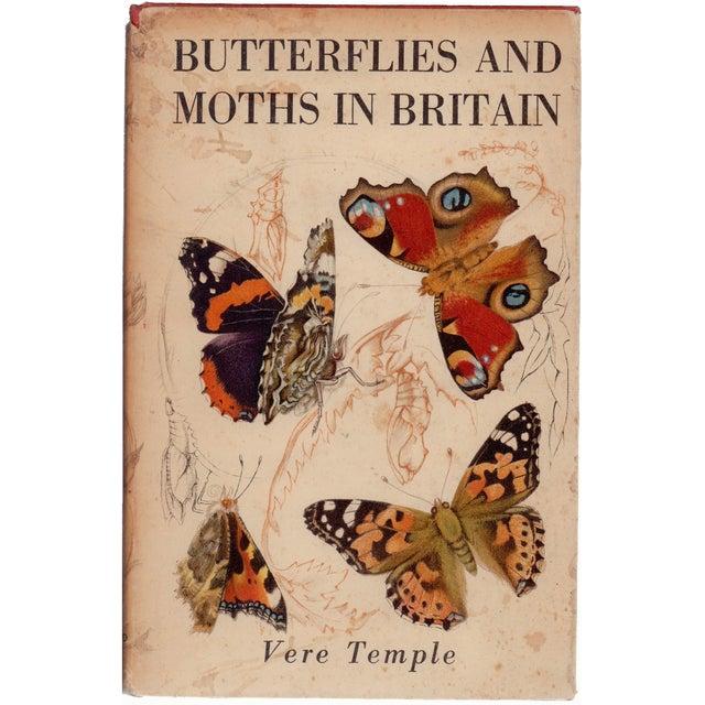 Butterflies & Moths in Britain For Sale