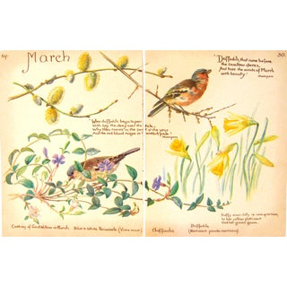 English Vintage Botanical & Bird Prints, Pair For Sale