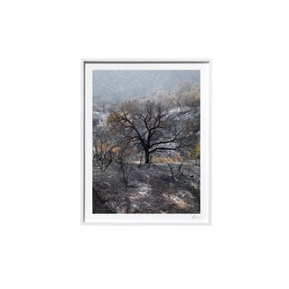 "Timothy Hogan ""Farther"" Original Framed Color Landscape Photograph, 2017 For Sale"