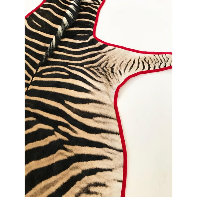 Modern Forsyth Authentic Zebra Hide Rug Trimmed in Red Velvet For Sale - Image 3 of 8