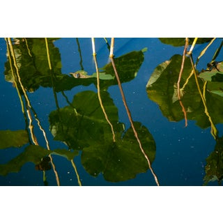 Waterlily Reflections 01 Photograph For Sale