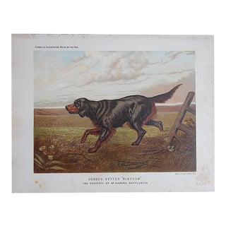 "Antique Dog Lithograph ""Gordon Setter"" For Sale"