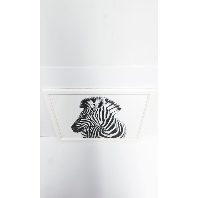 Early 21st Century Black and White Zebra Animal Photo With White Frame, England For Sale - Image 5 of 9
