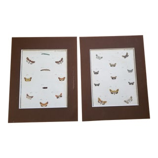 19th Century French Butterfly Prints - a Pair For Sale