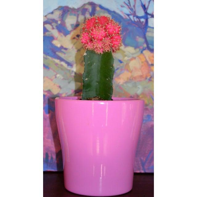 Petite Pink German Planter - Image 6 of 11