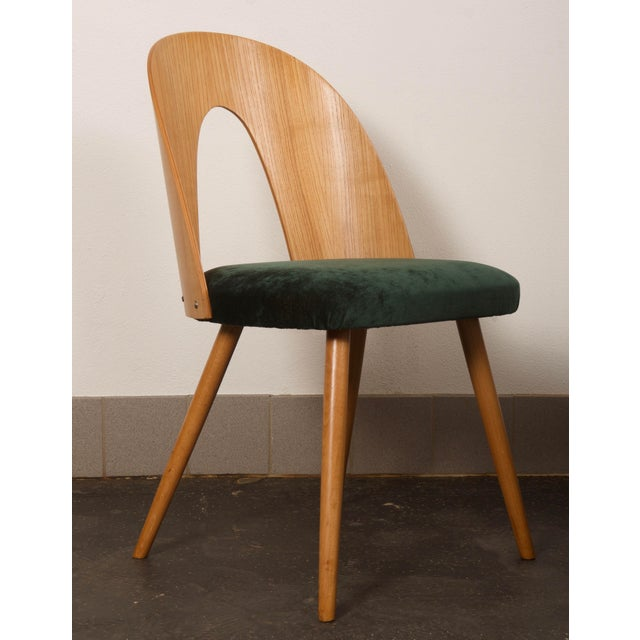 Ash Dining Chairs by Antonin Suman for Tatra For Sale - Image 10 of 10