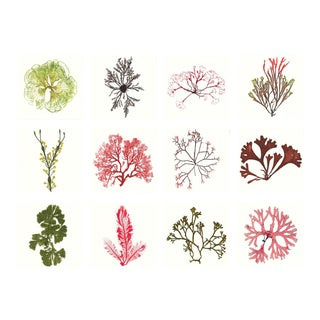 Bradbury Seaweeds, Unframed Artwork - Set Of 12 For Sale