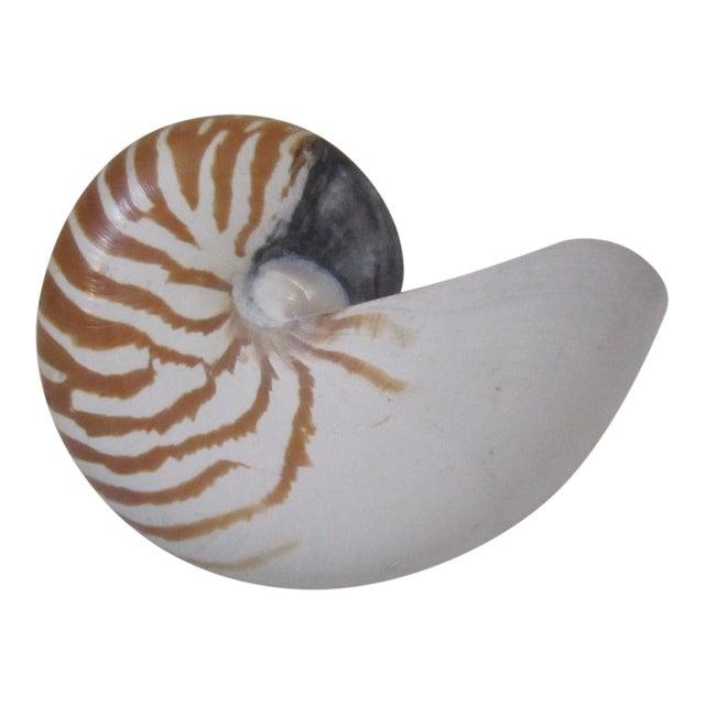 "Nautilus shell mounted on a lucite base. Vintage souvenir piece marked ""Westin Maui"" on the base."