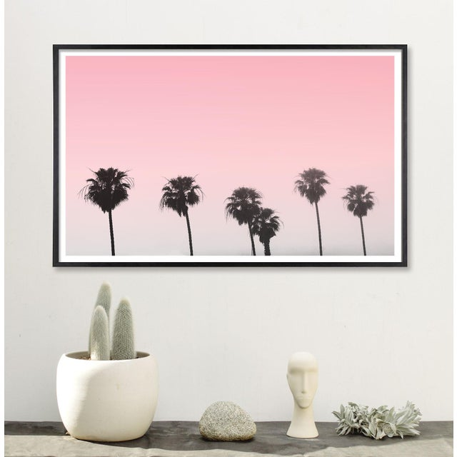 """Contemporary """"Pink Palm Trees With Sky"""" Contemporary Color Photograph 24"""" X 36"""" For Sale - Image 3 of 5"""