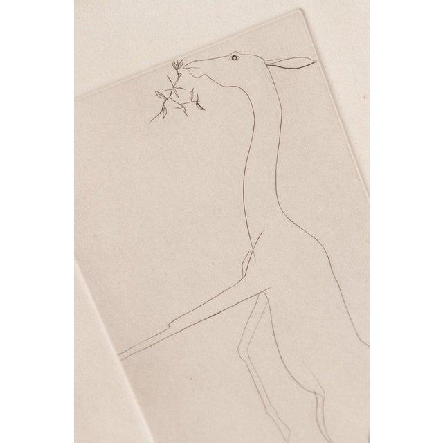 Etching of a Deer by Beth Van Hoesen (1926-2010) California For Sale - Image 11 of 13