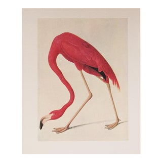 1966 American Flamingo Large Lithograph Print by Audubon