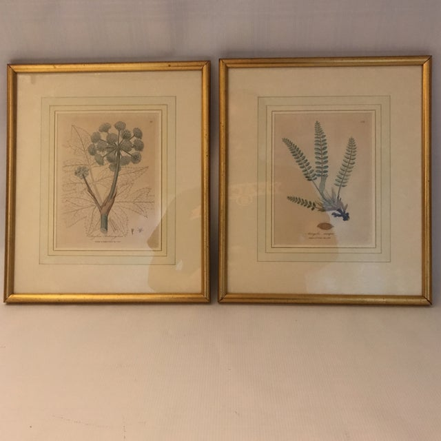 Framed Botanical Engravings - a Pair For Sale - Image 13 of 13