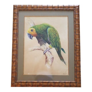 Large Antique Parrot Watercolor Paintings - A Pair For Sale