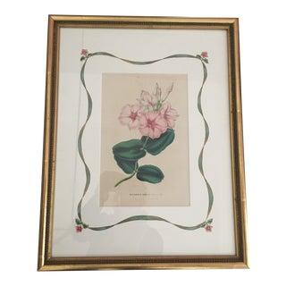 19th Century Vintage Botanical Print by Van Hotte For Sale