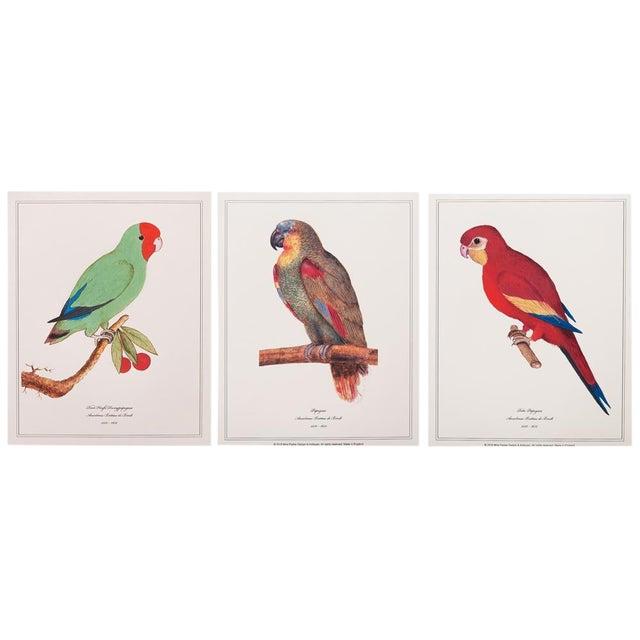 1590s Parrot Set of 3 by Anselmus De Boodt For Sale