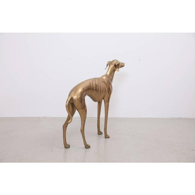 Extraordinary Huge Brass Dog or Greyhound, 1960s For Sale - Image 6 of 7