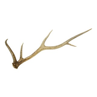 Vintage Five Point Elk Antler