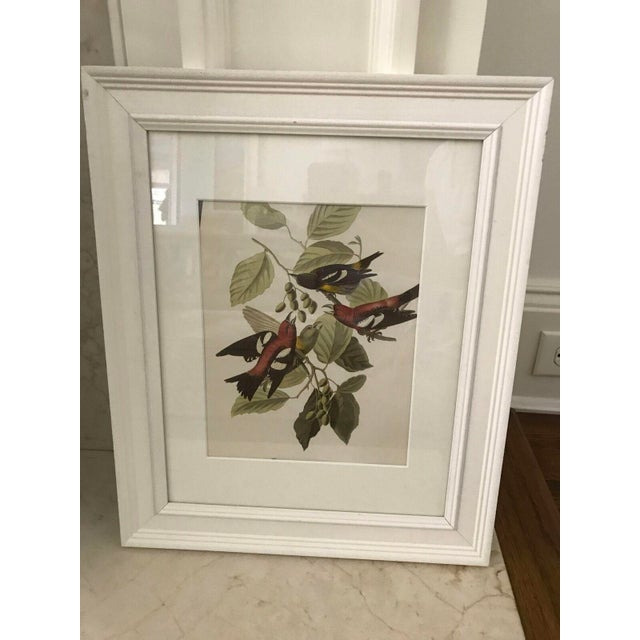 Framed Vintage Bird Prints - Set of 8 - Image 4 of 11