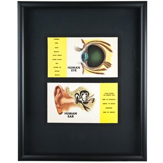 Framed Vintage Eye and Ear Flash Cards For Sale
